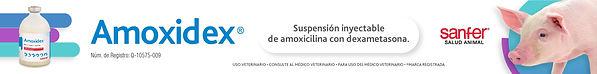 SanferSA.Porcinos.BannersOctubre.Amoxide