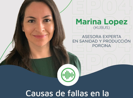 Maxico AG: Causas de fallas en la reproducción porcina.