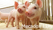 FOTOS MECADOX-01.jpg