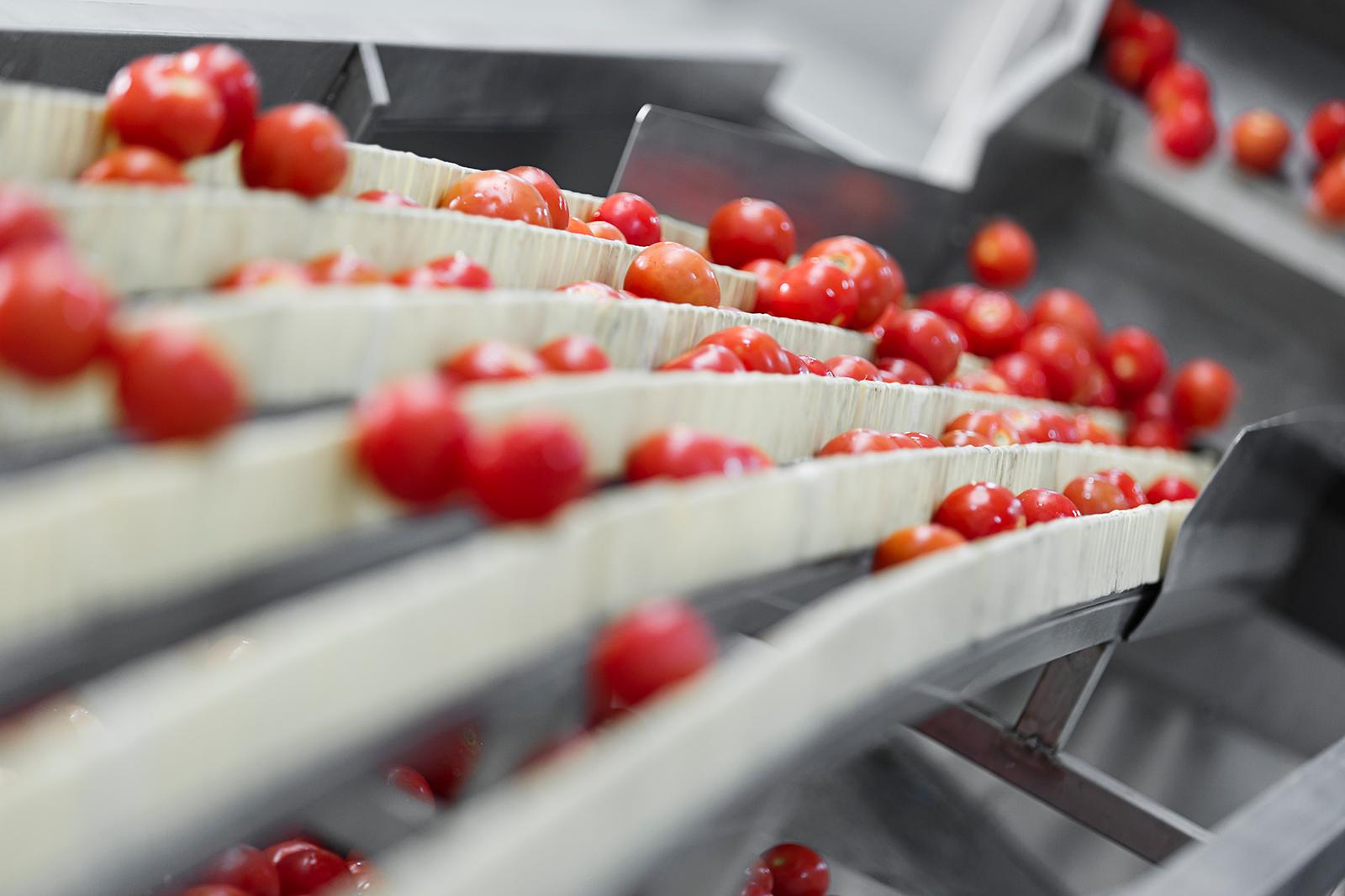 cranberries-washing-line