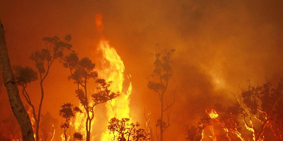 Bushfire Art Exhibition