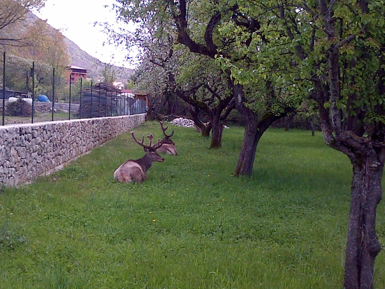 Villetta Barrea-20140504-00542.jpg