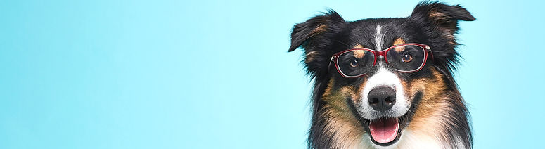 Dog_With_Glasses_edited.jpg