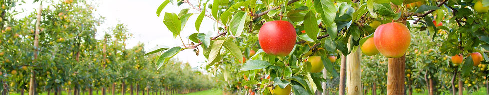 Apple_Orchard_edited.jpg