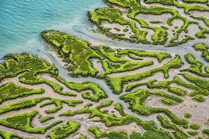 Saltmarsh - Mersea Island