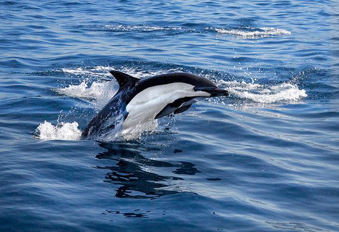 Dolphin Joy!