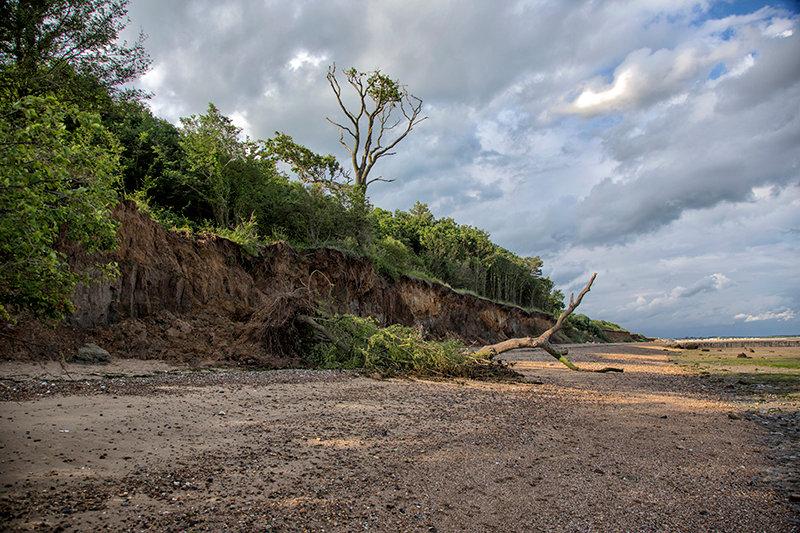 Fallen Tree Cudmore Grove