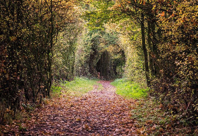 AutumnWalk - Cudmore Grove