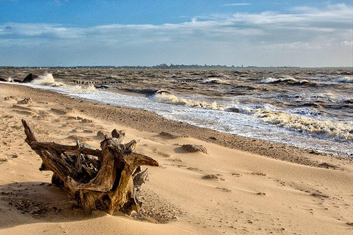 Driftwood - East Mersea