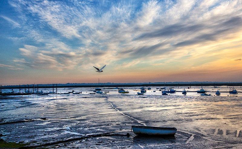 Seagull & Sky