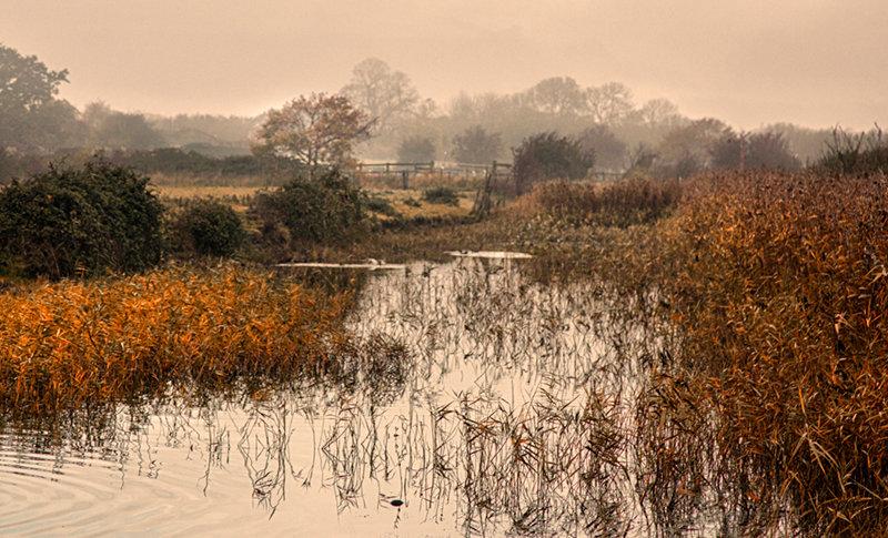 Autumn Colours - East Mersea