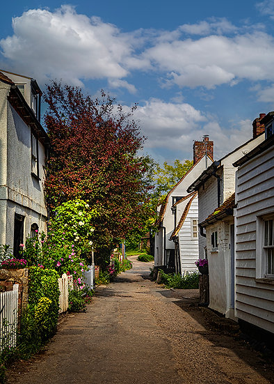 Summer in The Lane