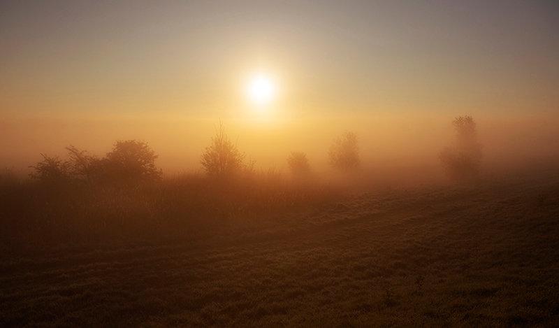 Sunrise & Trees