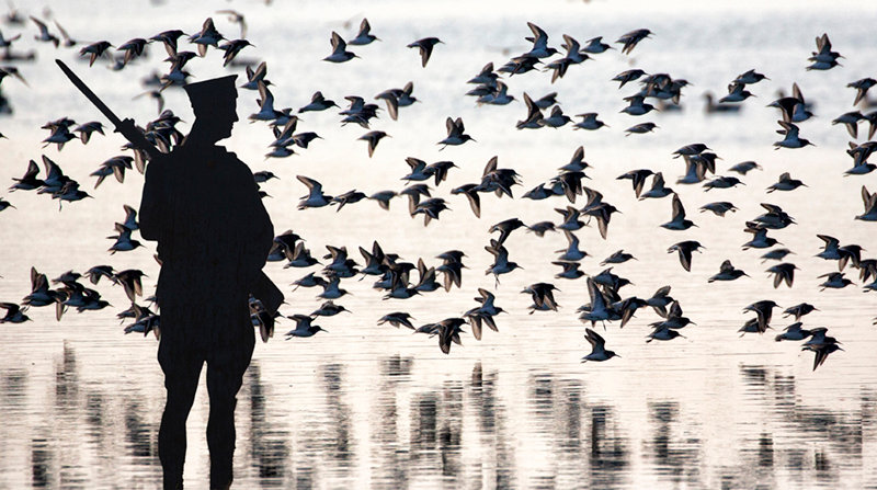 Soldier & Seabirds