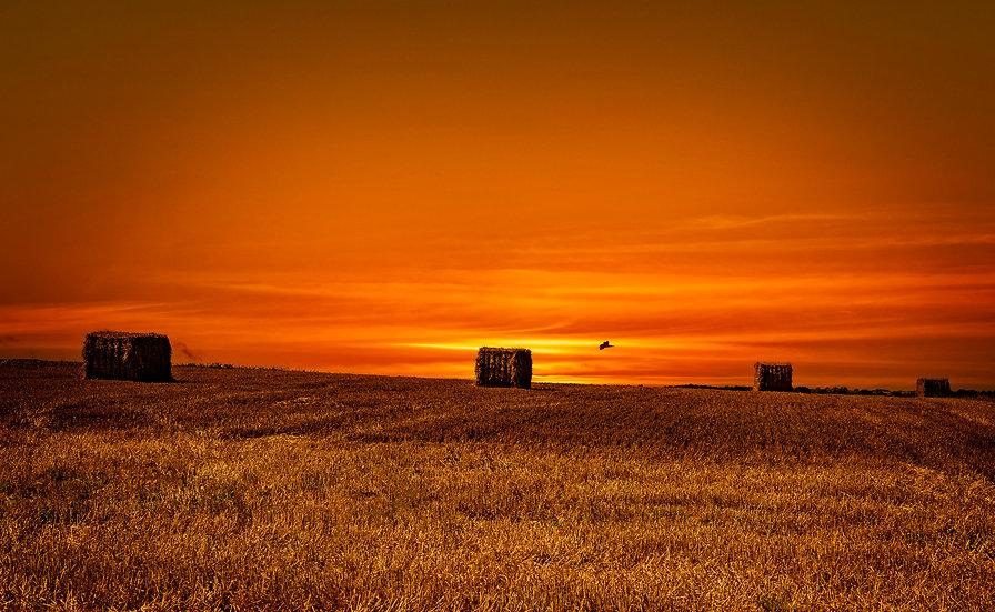 Sunset over Farmer Gray's Field