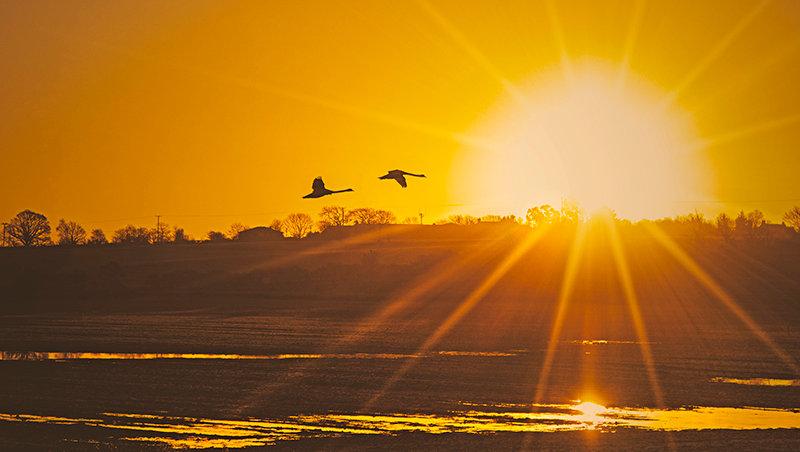 Sunstar & Swans
