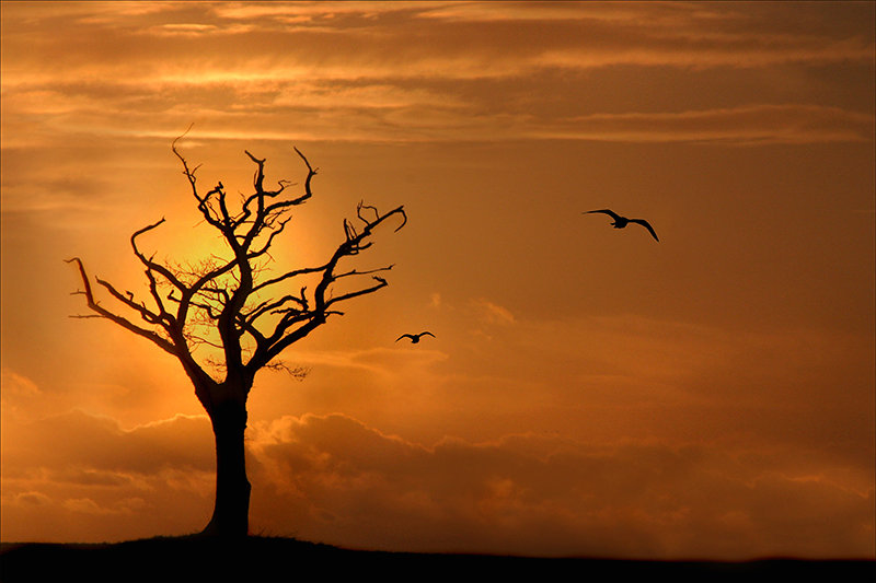 Lightning Tree - Peldon