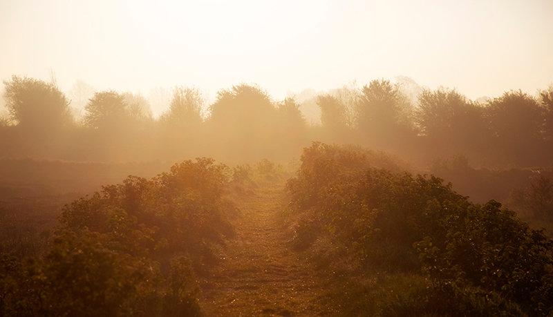 Lone Walk - Early Morning