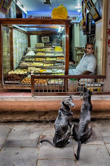 Starving Dogs - Varanasi