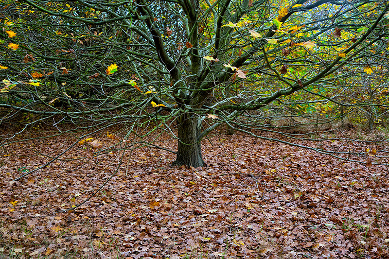 Autumn at Cudmore