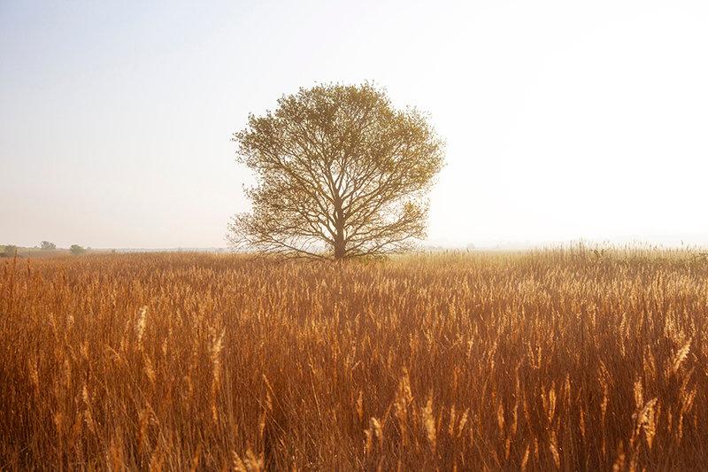 Borrow Dyke Tree