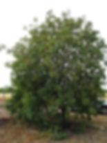 P1015590b.jpg