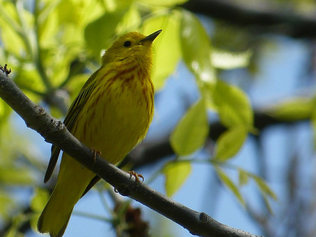 Field Trip Report: Intermediate-level Birding