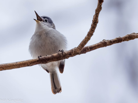 Presqu'ile Bird Report for 18-24 Jun 2021