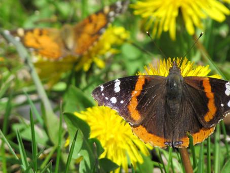 A Butterfly Retrospective