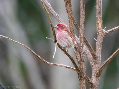 Presqu'ile Bird Report for 9-15 Apr 2021