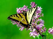 butterfly 7.jpg