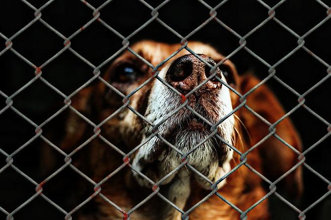 animal-welfare-1116203.jpg