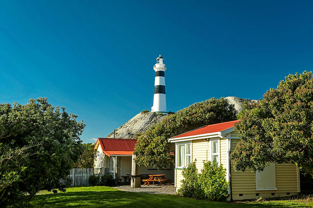 Driftwood Eco-Tours   Exclusive Adventures & Guided Tours of Coastal NZ   Cape Campbell Tour