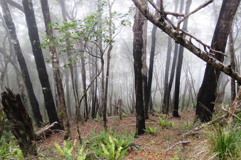 Driftwood Eco Tours