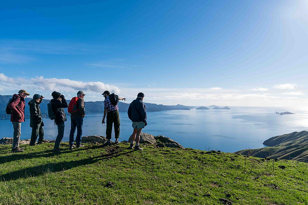 Driftwood Eco-Tours | Exclusive Adventures & Guided Tours of Coastal NZ | Port Ligar Tour