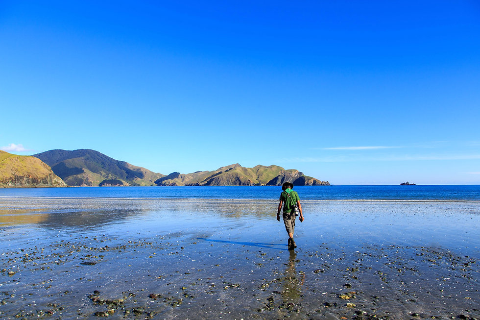 Driftwood Eco Tours guided tours through rural New Zealand