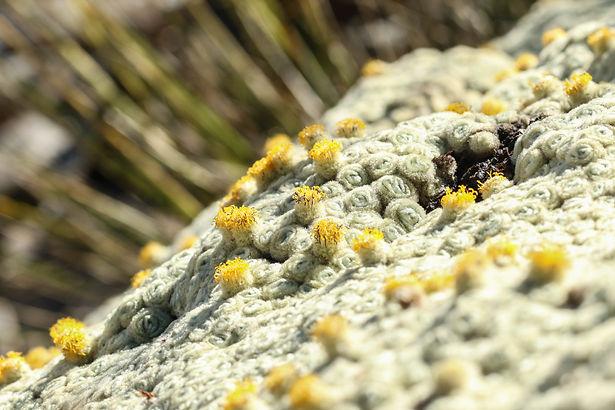 Driftwood Eco-Tours | Flora & Wildlife Guided Tours of NZ | Arthurs Pass Tours