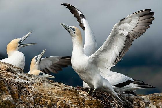 Driftwood EcoTours Coastal Tours to Port Ligar, D'Urville Island & Marlborough Sounds
