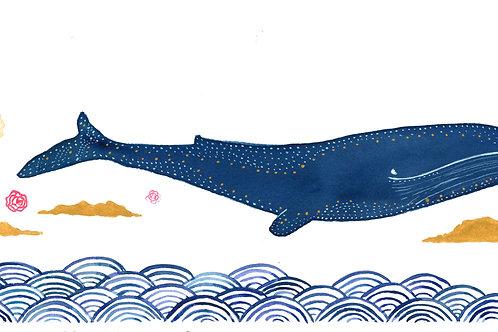 Baleine - couverture livre