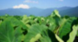 体験 農業 DSC01701.JPG