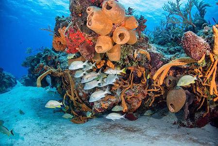 scuba-diving-cozumel.jpg