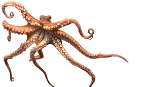 picture-octopus-png-10205.png