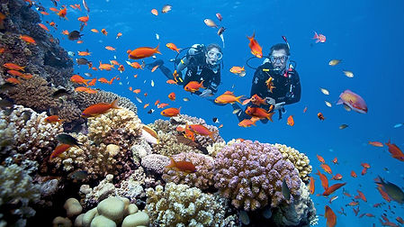 cozumel-scuba-diving-mexico-jan-2016.jpg