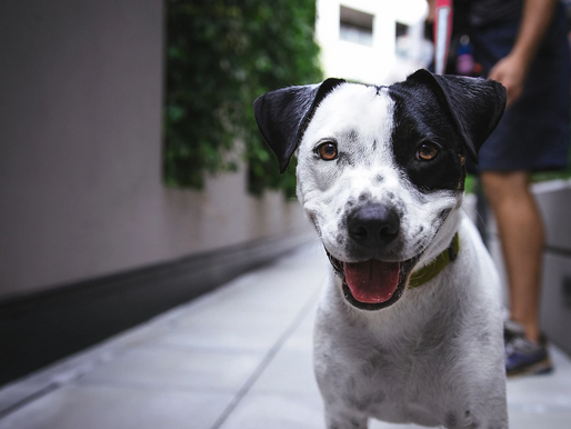 CBD pet market sees soaring sales
