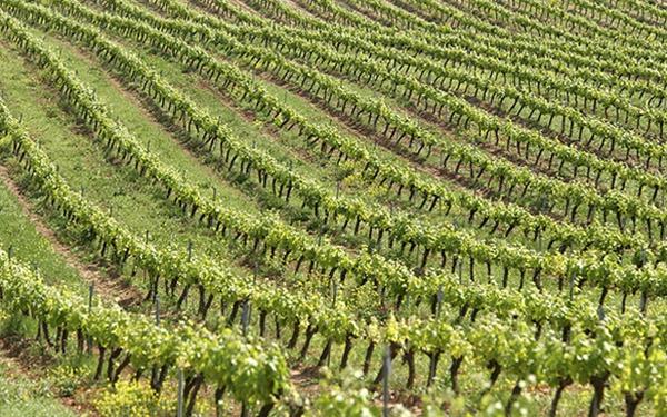 rota-vinho-navarra