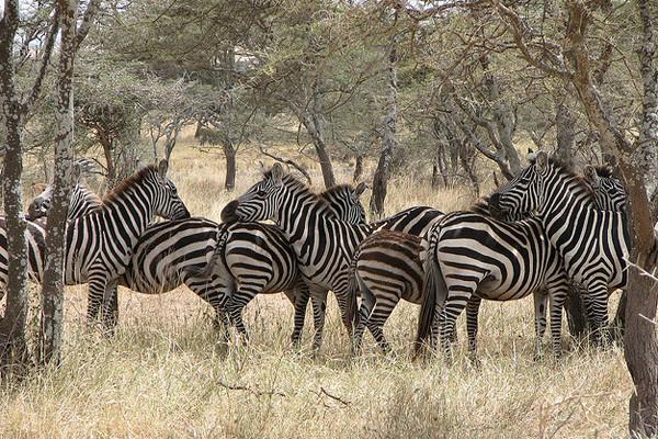 Parque Nacional de Serengueti - Tanzânia