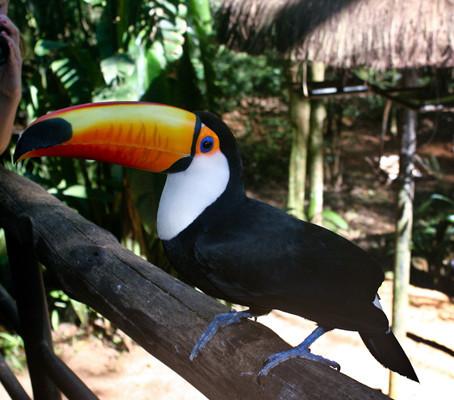 Parque das Aves, um sonho que se torna realidade em Foz do Iguaçu.