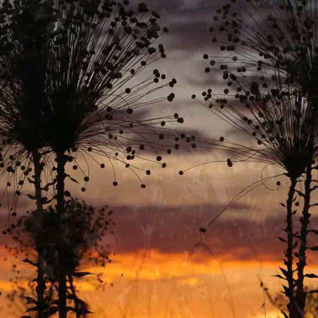 Goiás: Terra de natureza e gente linda!