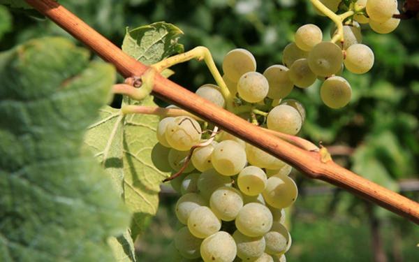 rota-vinho-sul-da-estiria