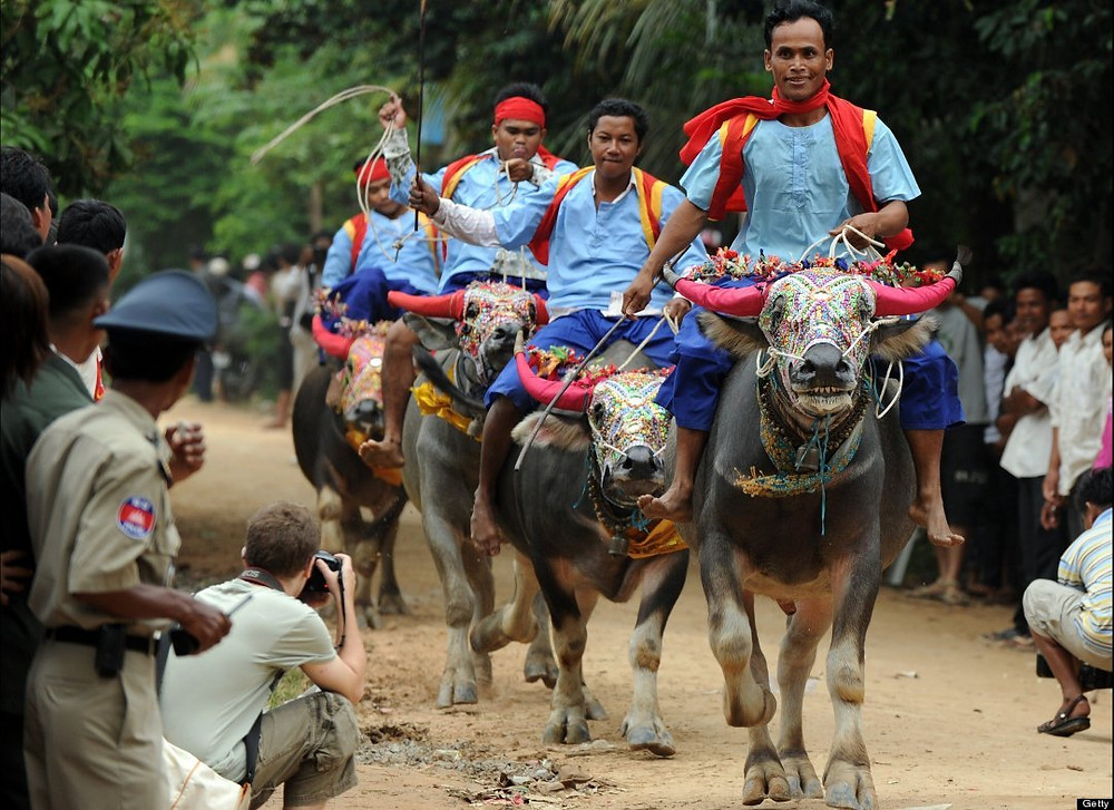 esportes exoticos pelo mundo - corrida de bufalo - camboja